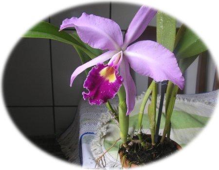 orquideas02