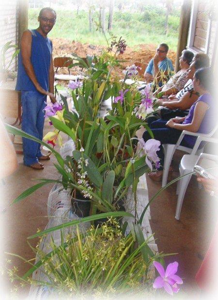orquideas01