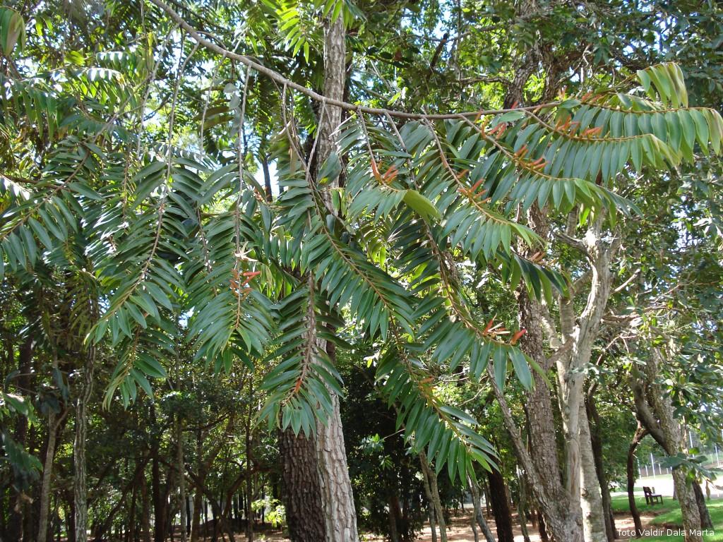 Conhecido Pimenta de Macaco | Blog Timblindim FG44