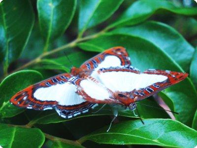 borboletas_11