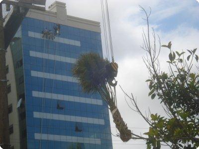 palmeiranoar