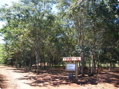 fazendapiana_09