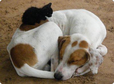 gato_e_cachorro_01
