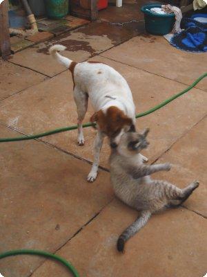 cat_dog_03