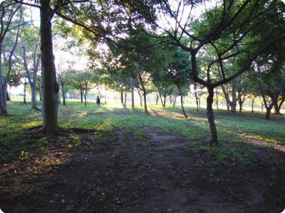 parque_ni_31