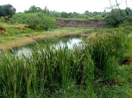 Ainda a barragem. Como se vê, a Natureza vai recompondo a área. Formou-se uma lagoa estreita no leito do córrego Desbarrancado.