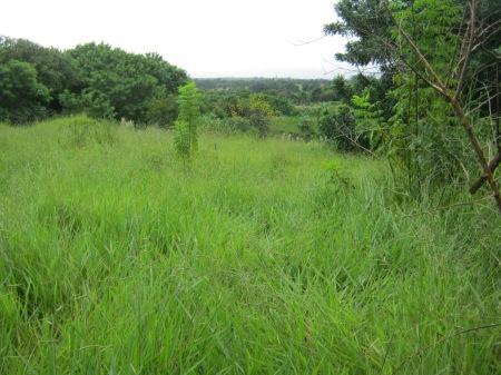 """À esquerda da voçoroca """"domada"""", árvores e pastagens. Mais ao fundo vê-se uma nesga do Anel Rodoviário."""